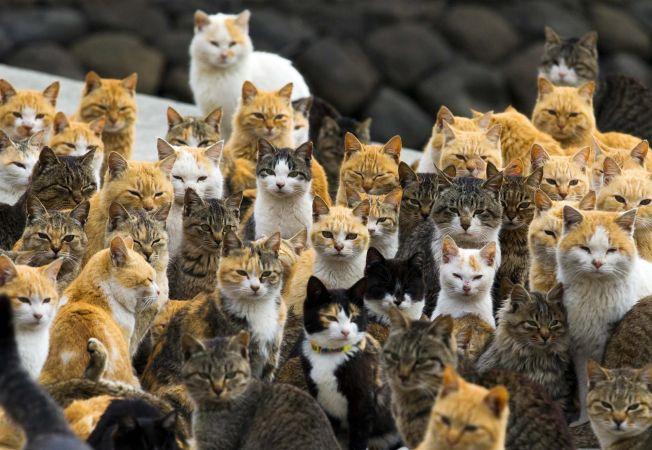 insula pisicilor 10
