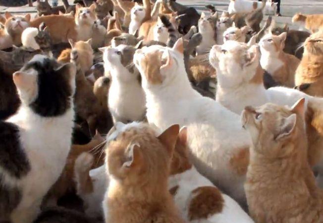 insula pisicilor 11