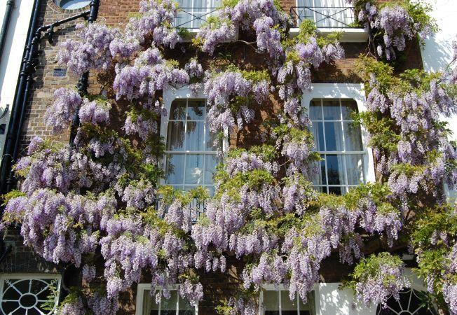 """5 plante ideale cu care iti poti """"imbraca"""" casa"""
