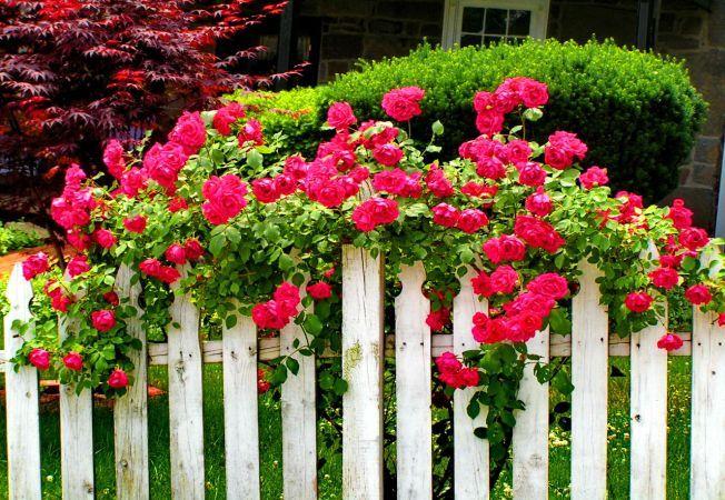 4 moduri prin care poti ascunde imperfectiunile din gradina si din curte cu ajutorul florilor