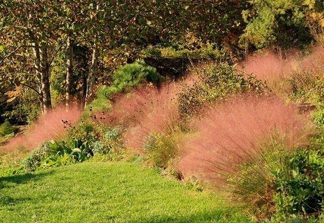 4 tipuri de iarba ornamentala care vor da un aer exotic gradinii tale