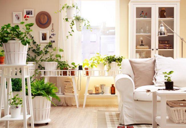 Lucruri interesante pe care nu le stiai despre plantele din locuinta ta