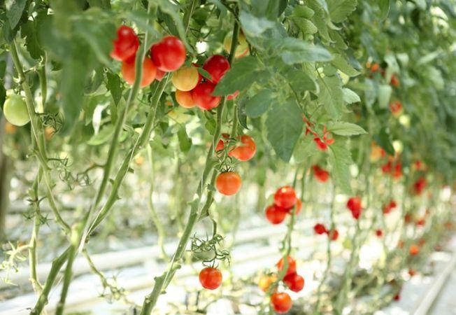 5 moduri in care poti cultiva rosiile, cu stil