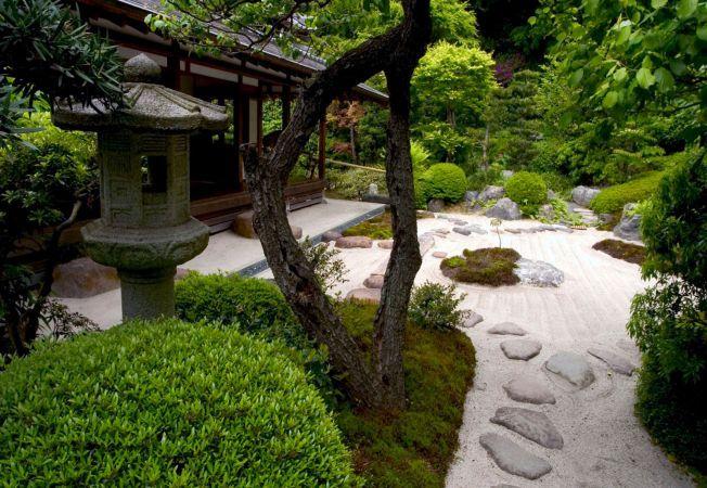3 plante ideale pentru o gradina Zen