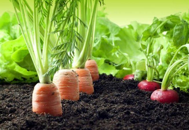Afla care sunt legumele cu cele mai putine calorii pe care le poti cultiva in gradina ta