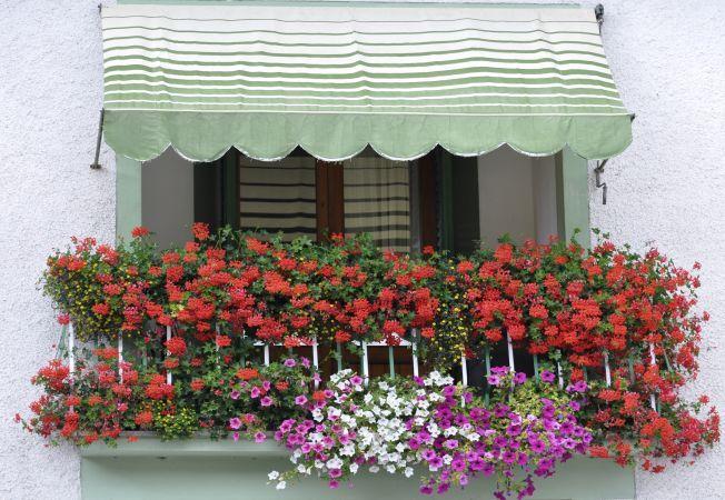 Balcon plin de muscate? Afla secretul cultivarii lor!