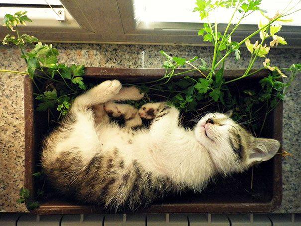 pisica in ghiveci 7