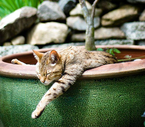 pisica in ghiveci 8