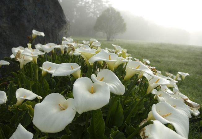 Cele mai potrivite plante decorative pentru solurile umede Plante decorative