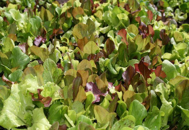 5 legume usor de cultivat in orice gradina