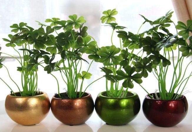 4 plante de apartament care aduc prosperitate si noroc, ideale pentru o casa noua