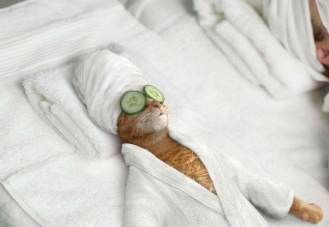 masaj pisica