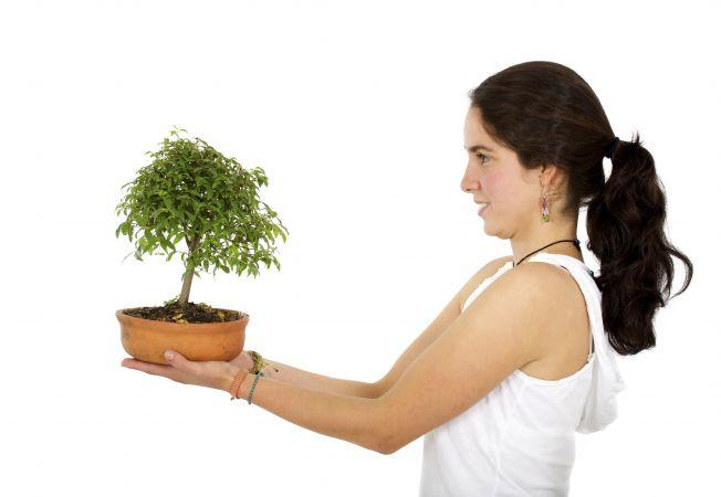 hepta bonsai