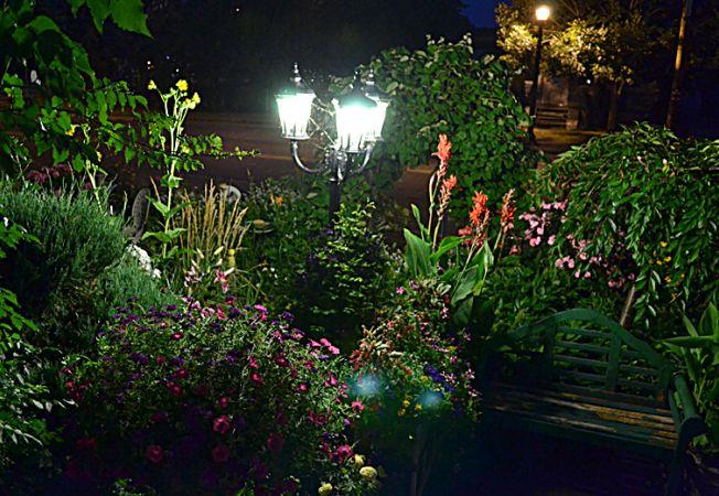 flori gradina noapte
