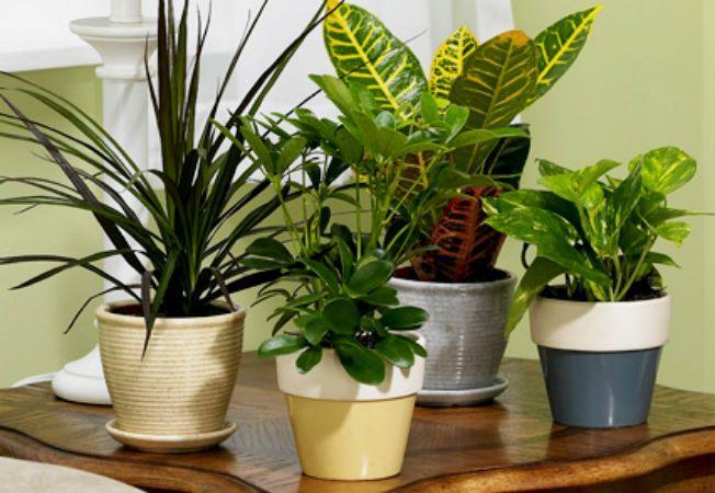 De ce trebuie sa tii cont cand muti plantele in interior for Plante d appartement