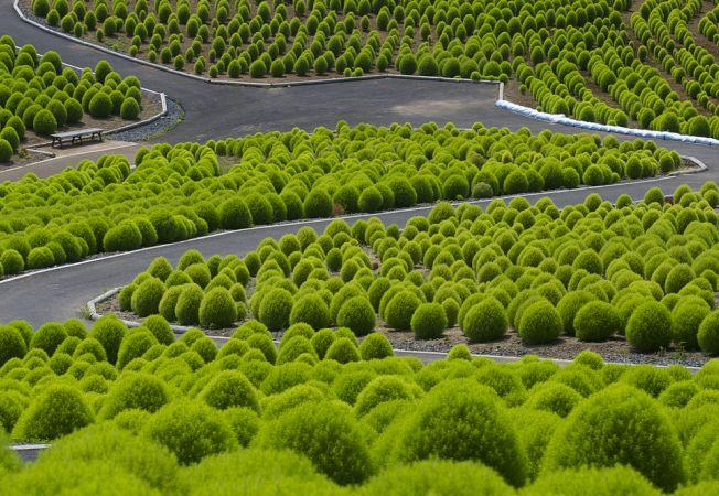 hitachi park