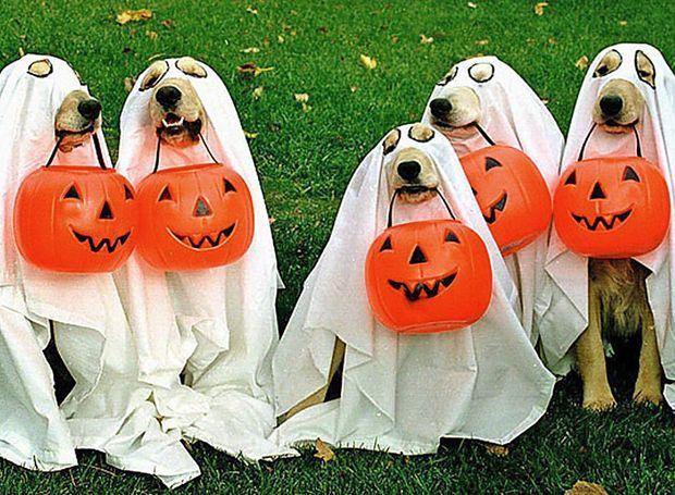 animale halloween 2