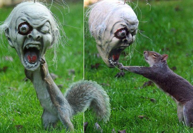 animale halloween 3