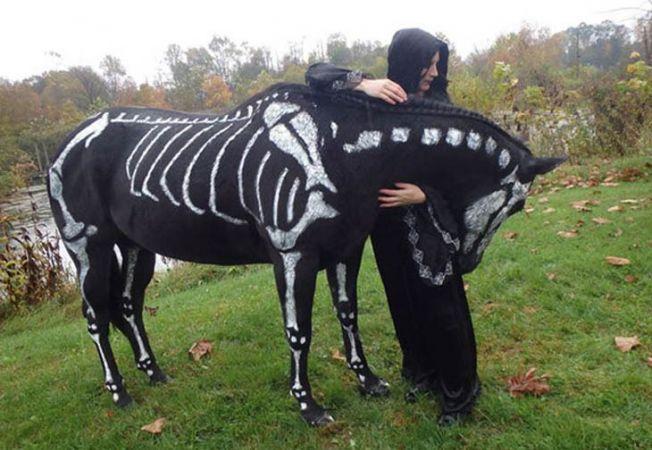 animale halloween 7