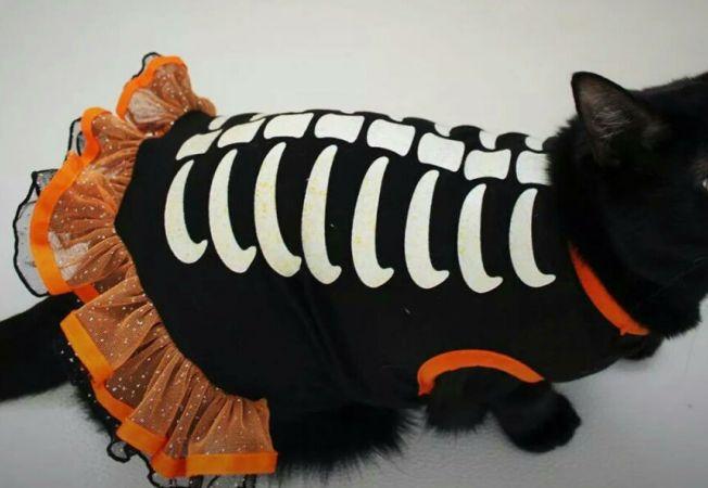 animale halloween 14