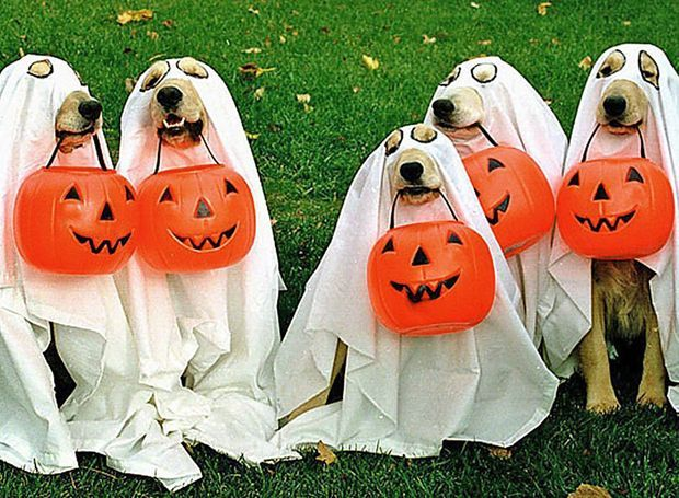 animale halloween