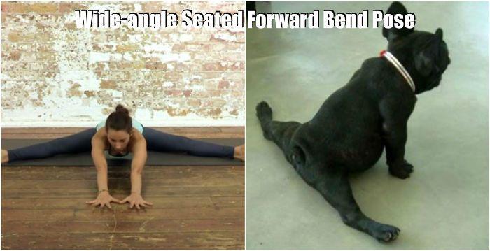 animale yoga