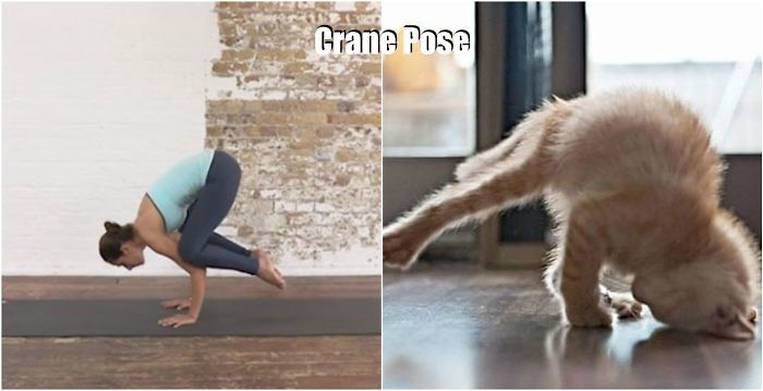 animale yoga