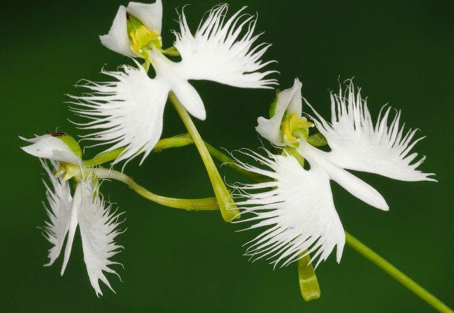 3 orhidee uimitoare, a caror frumusete iti taie respiratia