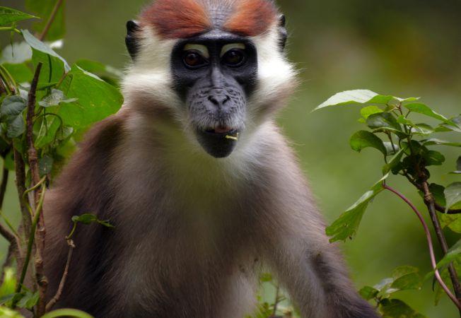 hepta maimuta