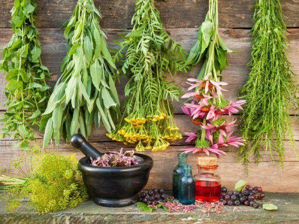 9 plante medicinale pe care le poti creste in gradina for Plante x ragnarok
