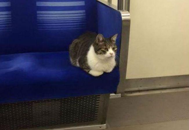 pisica metrou