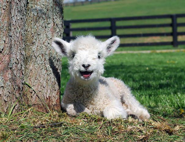 Animale fericite