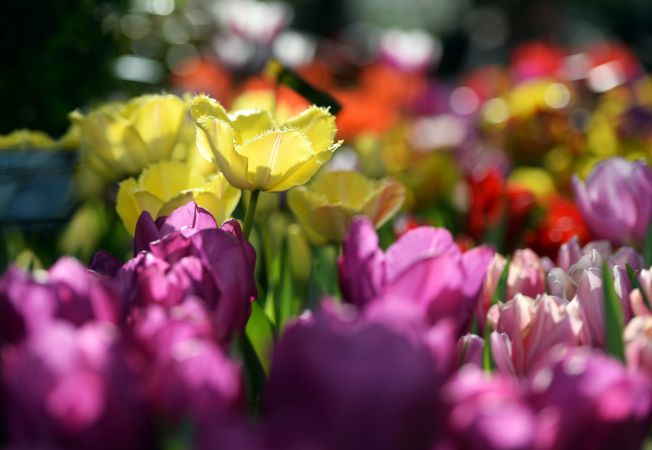 gradina flori hepta