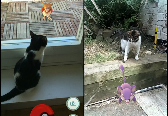 animale pokemoni
