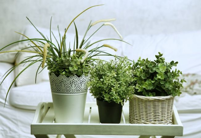 Suferi de insomnii decoreaza ti casa cu plante for Plante x ragnarok