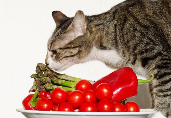 pisica legume