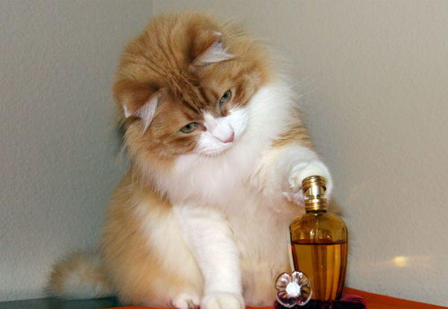 parfum cu aroma de pisica