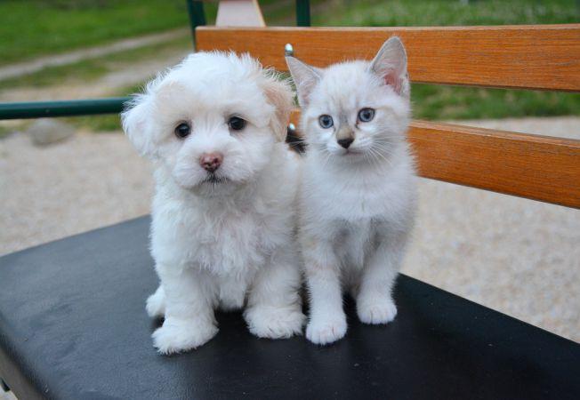 caine pisica