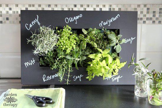 7 plante aromatice pe care sa le cresti in casa for Plante x ragnarok