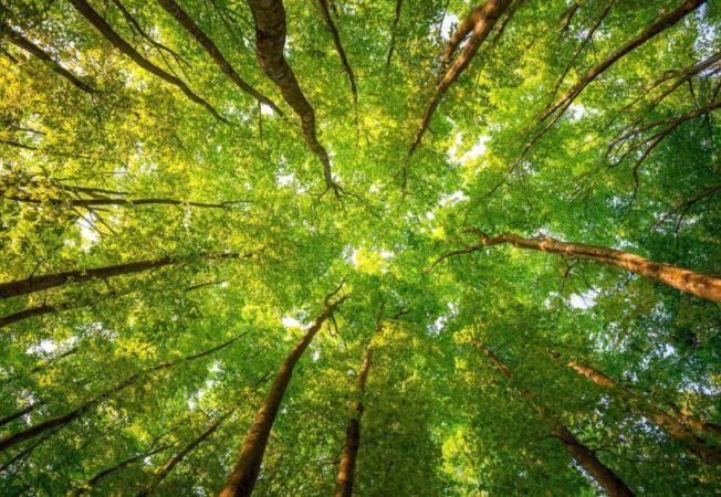 Expertul Acasa.ro, astrolog Andreea Dinca: Zodiacul Arboricol. Tu ce arbore esti?