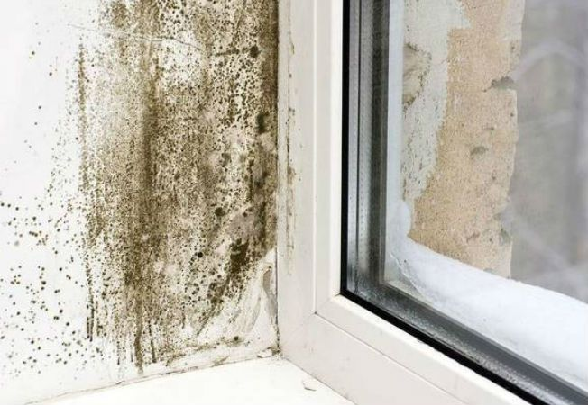 mucegai locuinta