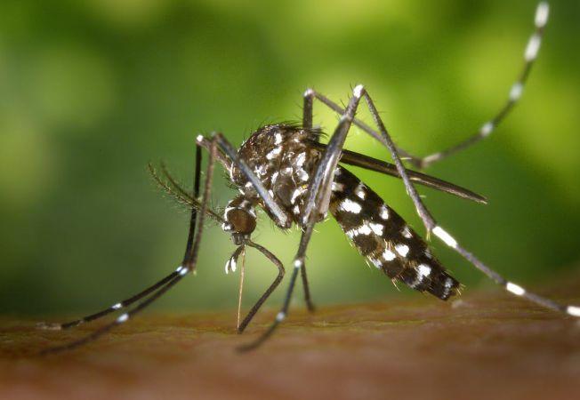 7 intepaturi de insecte - cum le recunosti si cum sa reactionezi