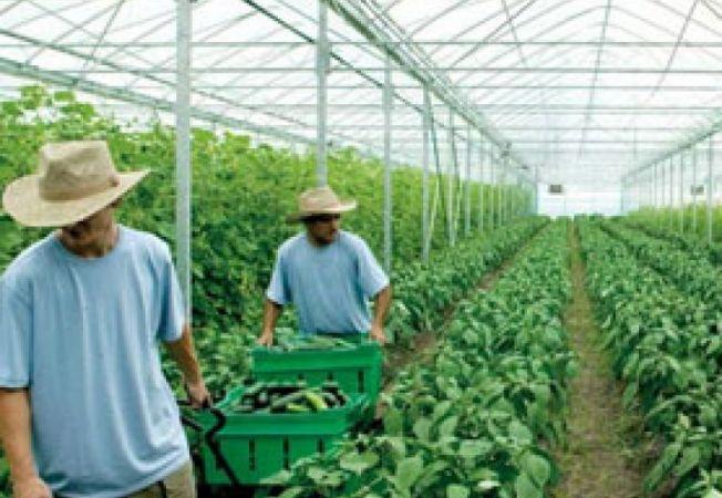 sera agricultura