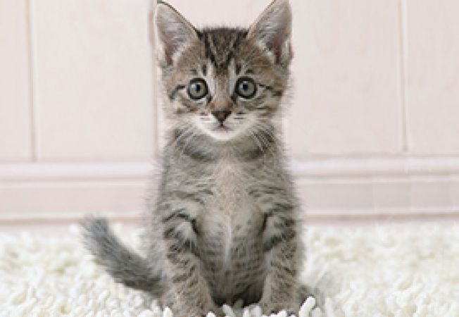 o noua pisica