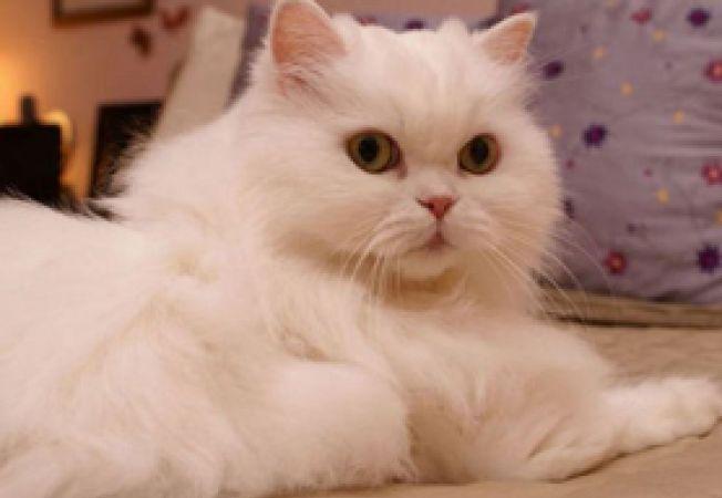 simturile pisicii3