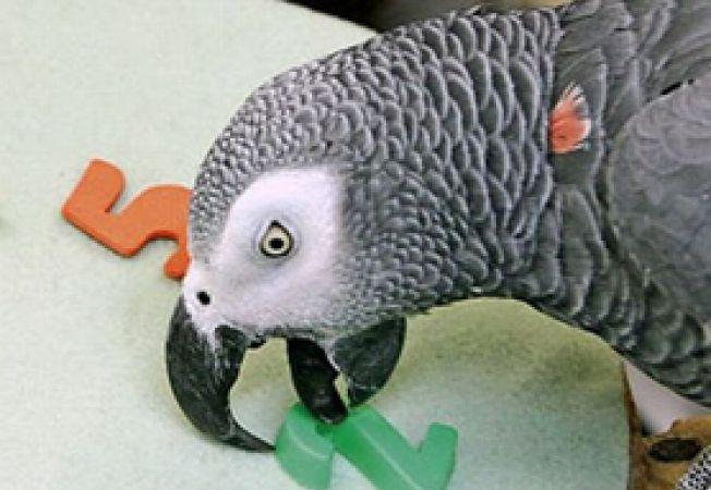 comportamentul papagalilor