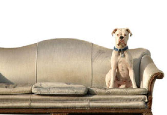 caine pe canapea