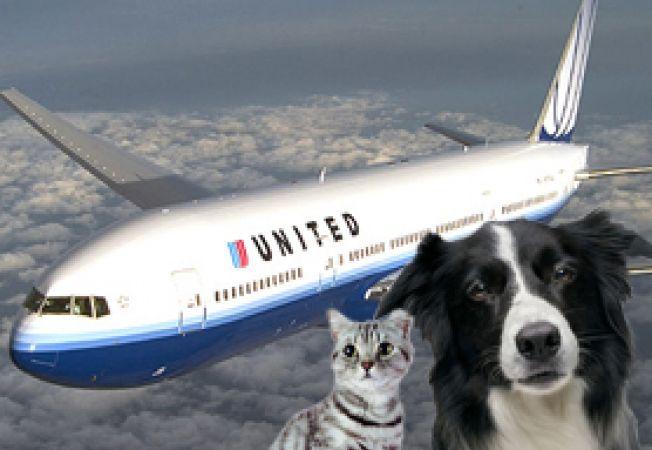 transportul animalelor cu avionul