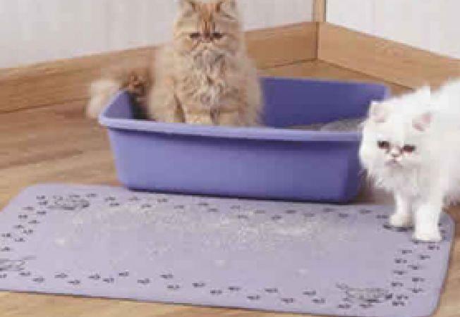 nisipul pisicii