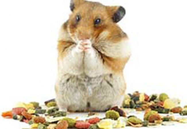 hranirea hamsterilor